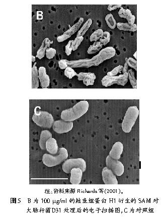 鱼类组蛋白衍生抗菌肽与其抗菌的关系--中国饲料工业