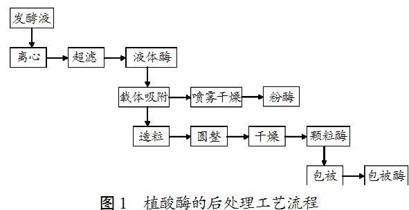 2 从后处理工艺提高植酸酶热稳定性的措施 2.1 添加稳定剂 2.1.1 盐 盐的添加能显著改善酶的热稳定性,因盐类主要存在离子键作用,当酶的活性中心含有离子作为配位体时,盐离子就能稳定酶的构象。另外,盐可作为水分子的替代物占据水的位置,排除自由水对酶造成的不稳定化影响(专利EP 0758018 A1)。 盐的种类和浓度会影响到植酸酶的热稳定性。Igamnazarov等(1999)研究金属离子对胞外植酸酶Bacterium SP.